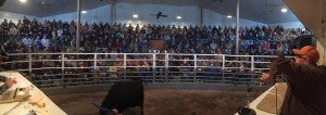 Business Liquidation Cattle Auction