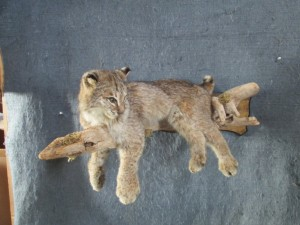 Body Mount Bobcat